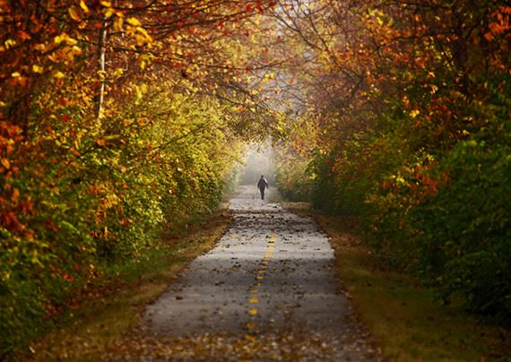 a walking trail flanked by trees with red leaves, and a person walking on it in the distance